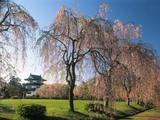 Wallpaperi Th_33480_Castle_Hirosaki3_Japan_122_1162lo